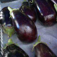 padlizsán, angolul eggplant