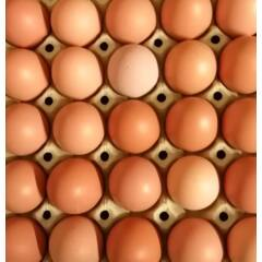 10db alomi tojás | házi tojás