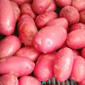 Krumpli 1 kg