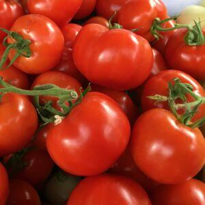 1 kg termelői paradicsom