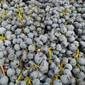 1 kg termelői Othello szőlő