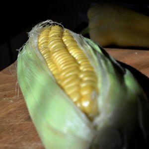 1 cső rövid kukorica termelőtől