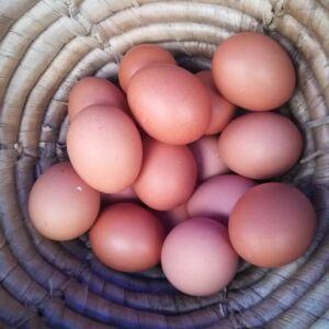 1 db nagy házi tojás