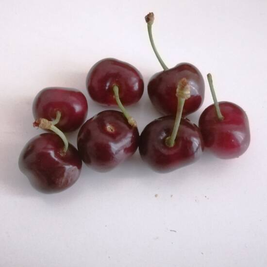 bigarreau fajtájú hazai cseresznye